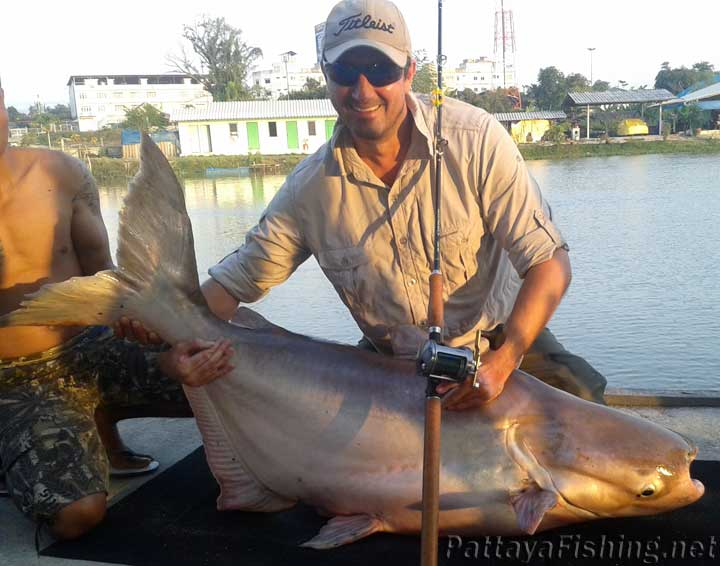 47kg Mekong giant catfish